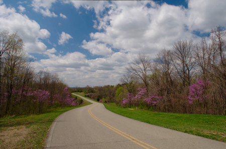 Spring Road, photographed by David Bennett